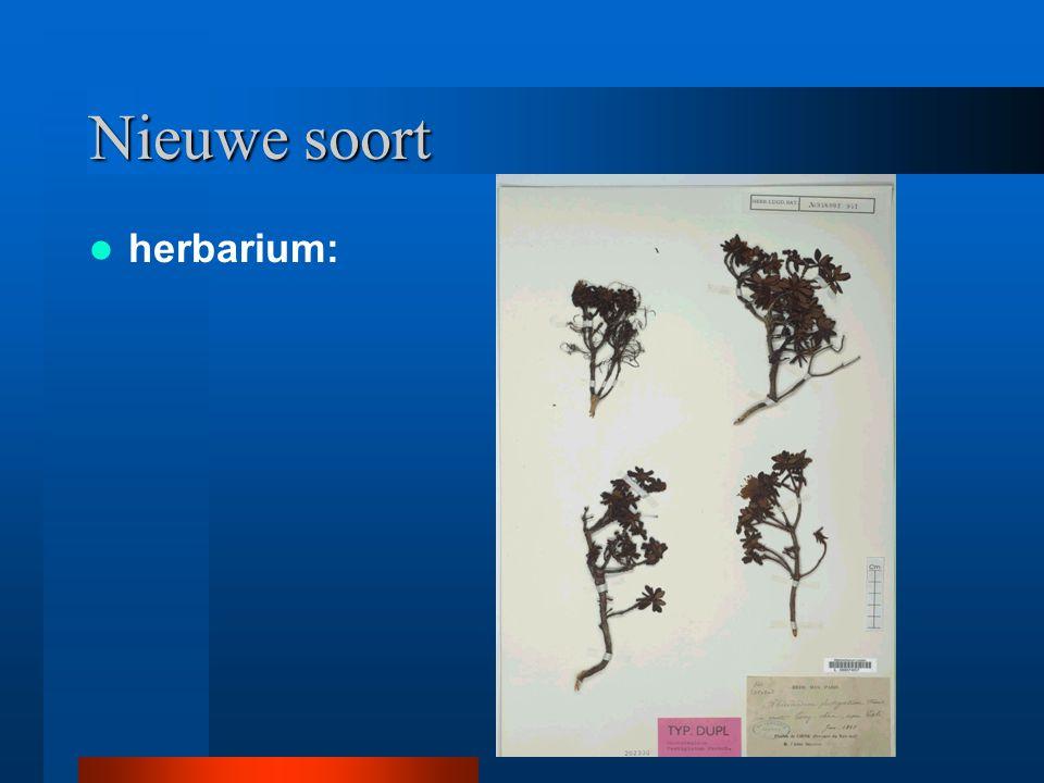 Nieuwe soort herbarium: