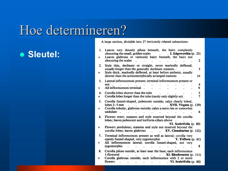 Hoe determineren Sleutel: Hybride met catawbiense/maximum