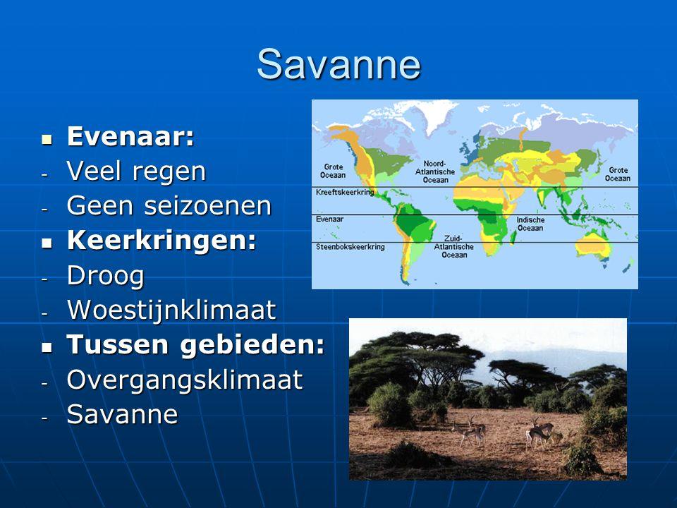 Savanne Evenaar: Veel regen Geen seizoenen Keerkringen: Droog