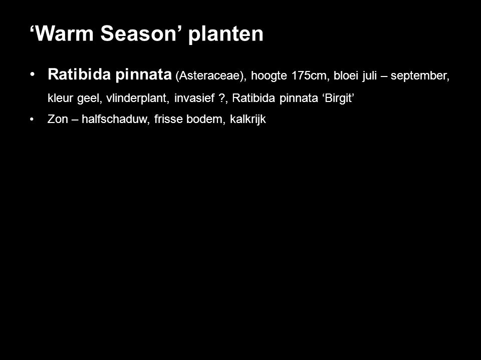 'Warm Season' planten Ratibida pinnata (Asteraceae), hoogte 175cm, bloei juli – september,
