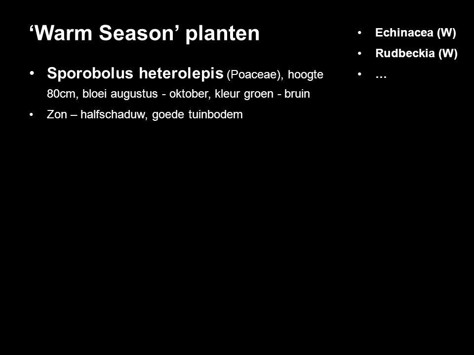 'Warm Season' planten Echinacea (W) Rudbeckia (W) … Sporobolus heterolepis (Poaceae), hoogte 80cm, bloei augustus - oktober, kleur groen - bruin.