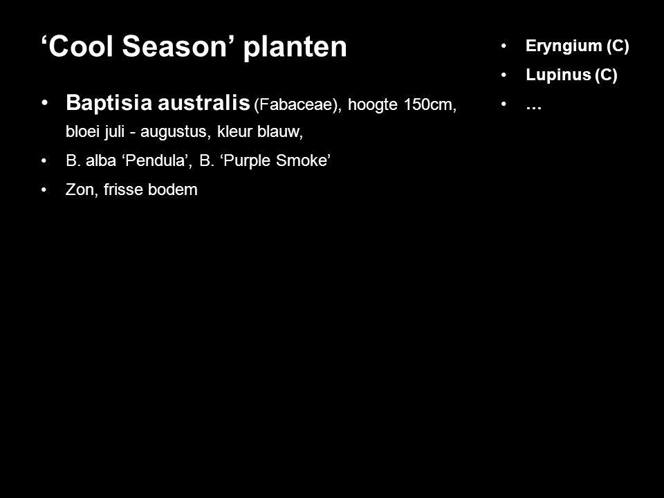 'Cool Season' planten Eryngium (C) Lupinus (C) … Baptisia australis (Fabaceae), hoogte 150cm, bloei juli - augustus, kleur blauw,
