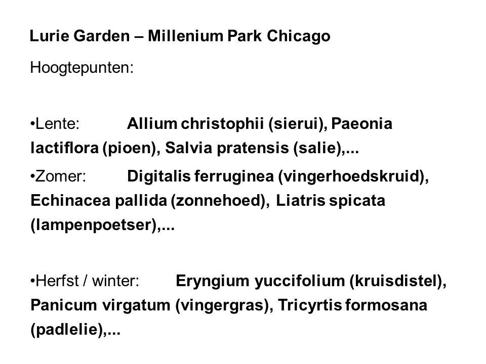 Lurie Garden – Millenium Park Chicago
