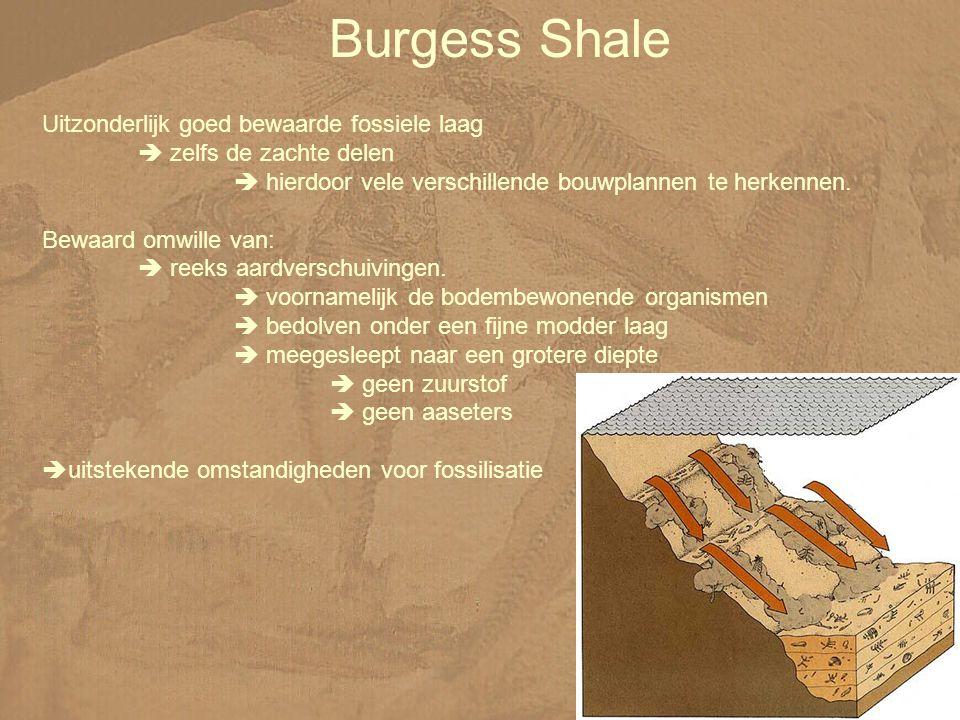 Burgess Shale Uitzonderlijk goed bewaarde fossiele laag