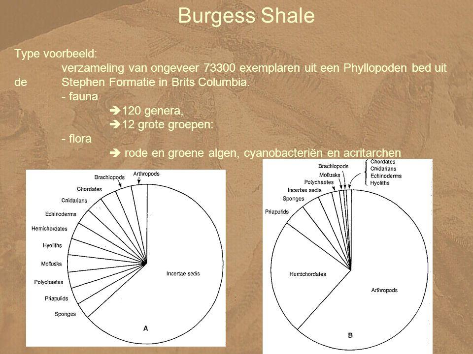 Burgess Shale Type voorbeeld: