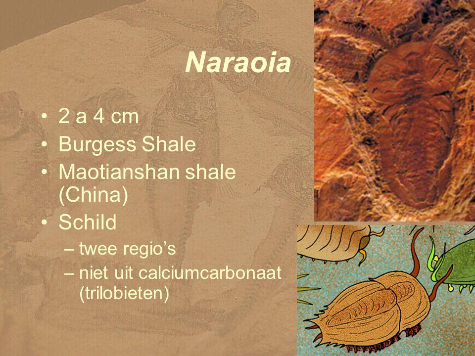 Naraoia 2 a 4 cm Burgess Shale Maotianshan shale (China) Schild