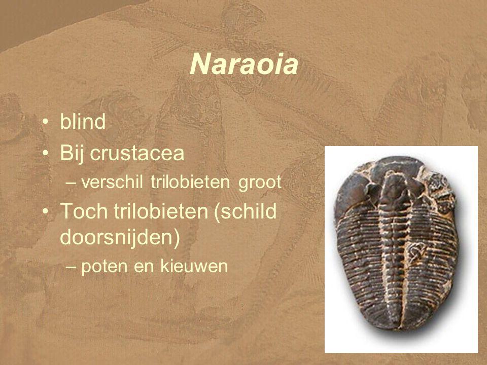 Naraoia blind Bij crustacea Toch trilobieten (schild doorsnijden)