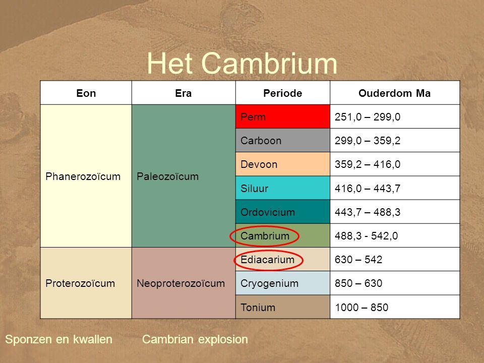 Het Cambrium Sponzen en kwallen Cambrian explosion Eon Era Periode