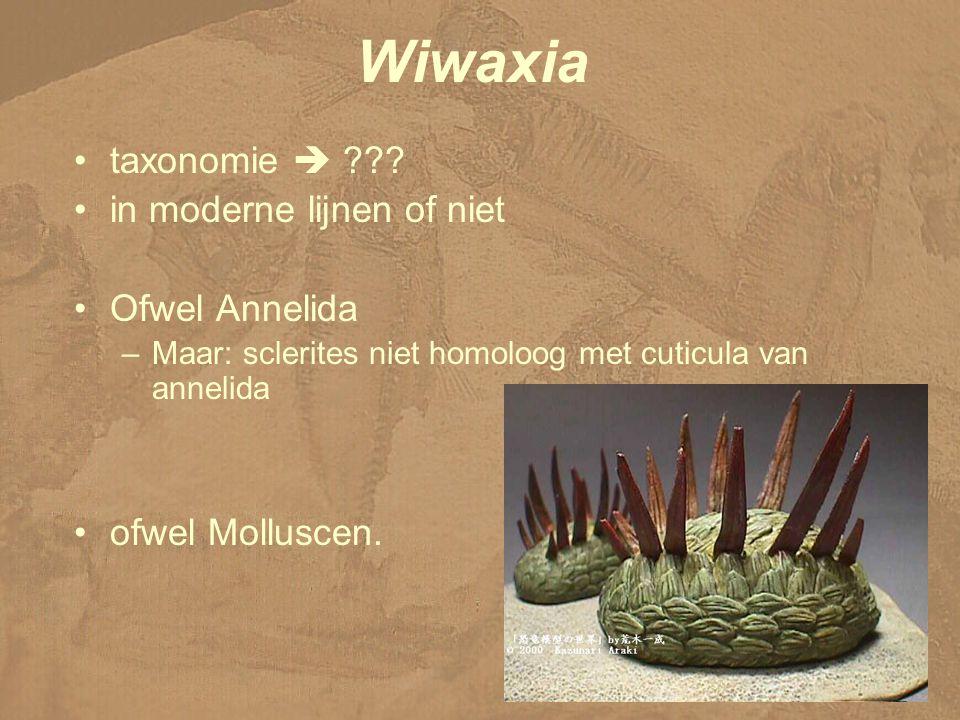 Wiwaxia taxonomie  in moderne lijnen of niet Ofwel Annelida