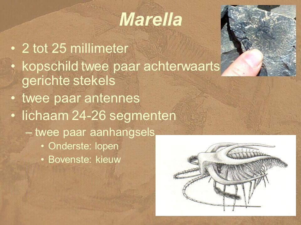 Marella 2 tot 25 millimeter