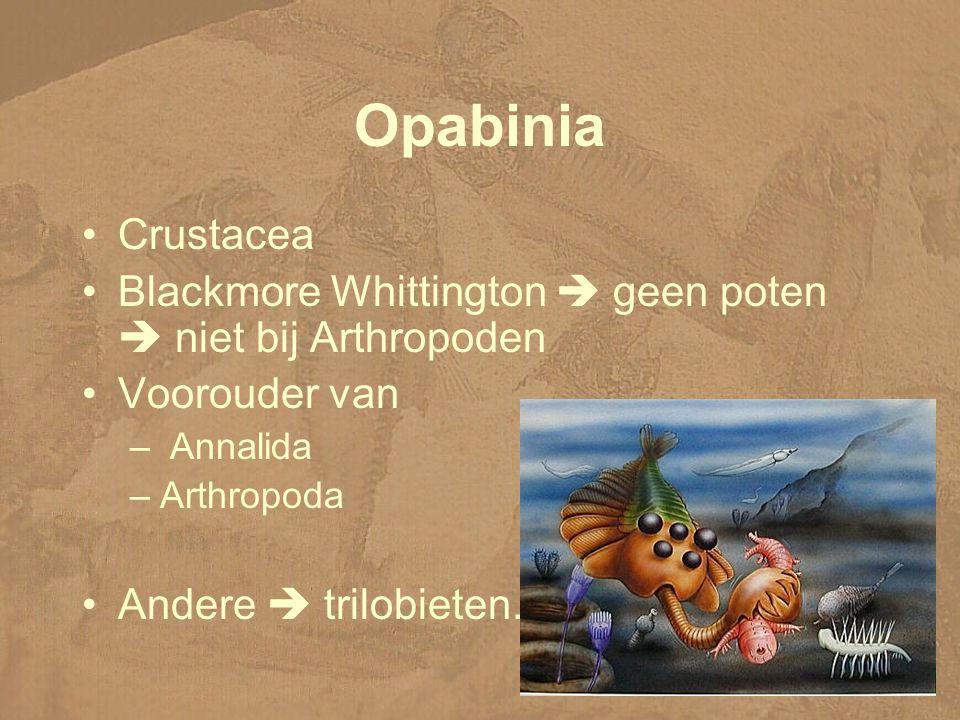 Opabinia Crustacea. Blackmore Whittington  geen poten  niet bij Arthropoden. Voorouder van. Annalida.