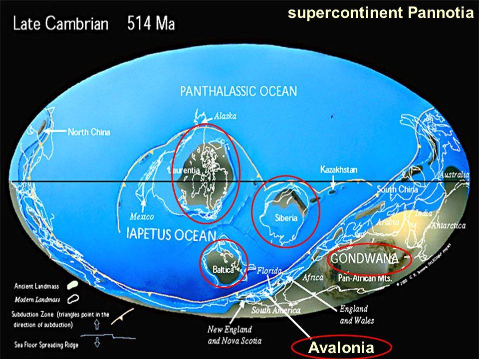 supercontinent Pannotia