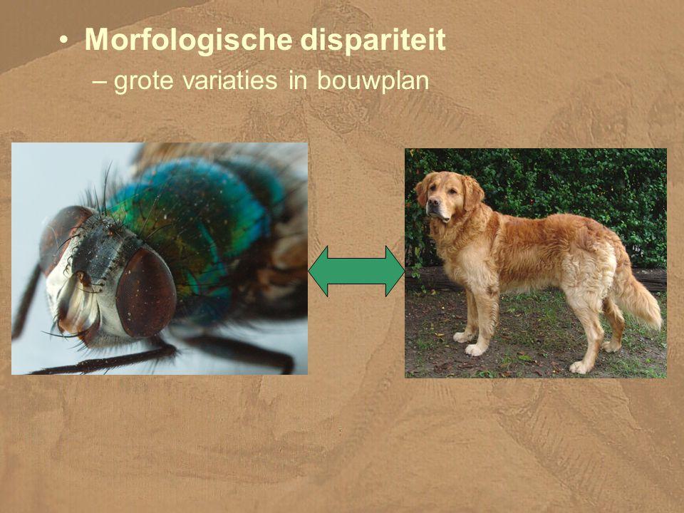 Morfologische dispariteit