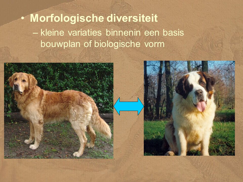Morfologische diversiteit