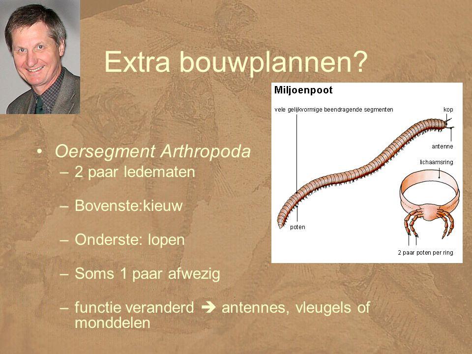Extra bouwplannen Oersegment Arthropoda 2 paar ledematen