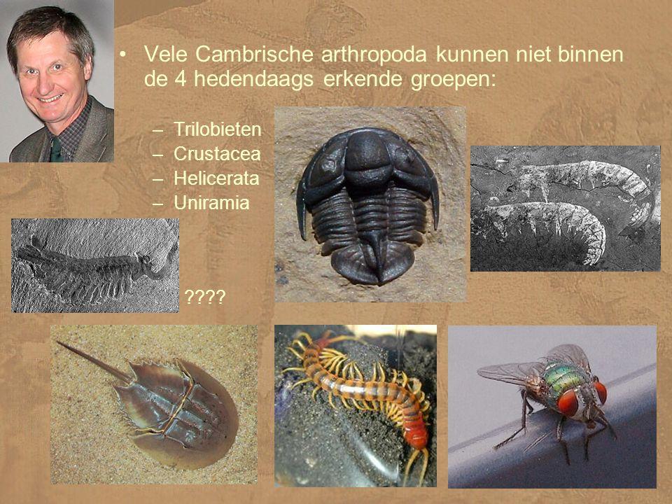 Vele Cambrische arthropoda kunnen niet binnen de 4 hedendaags erkende groepen: