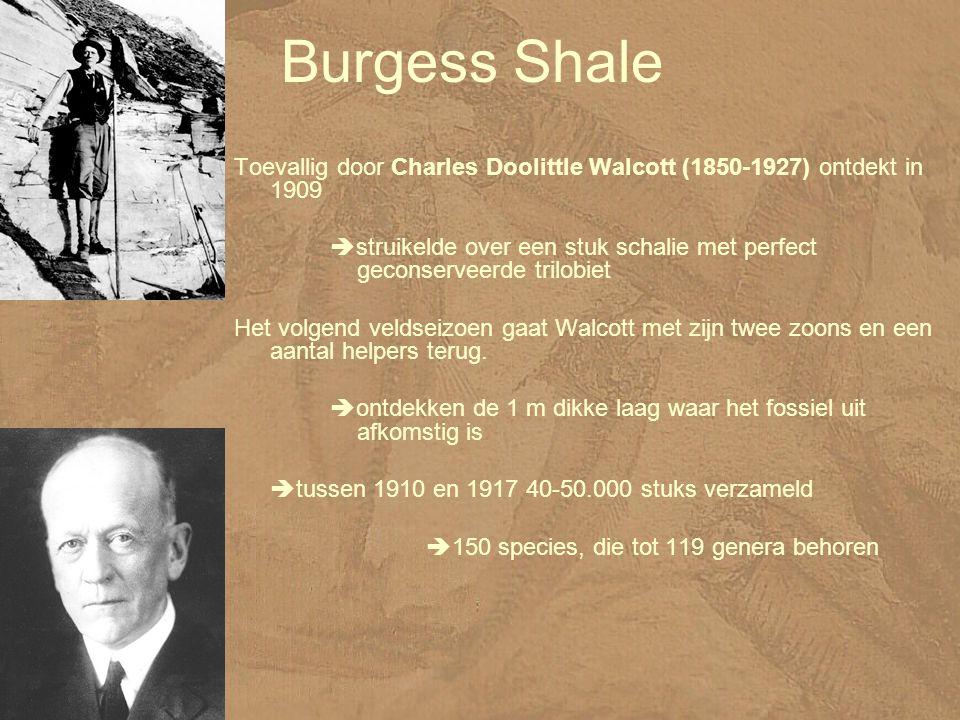 Burgess Shale Toevallig door Charles Doolittle Walcott (1850-1927) ontdekt in 1909.