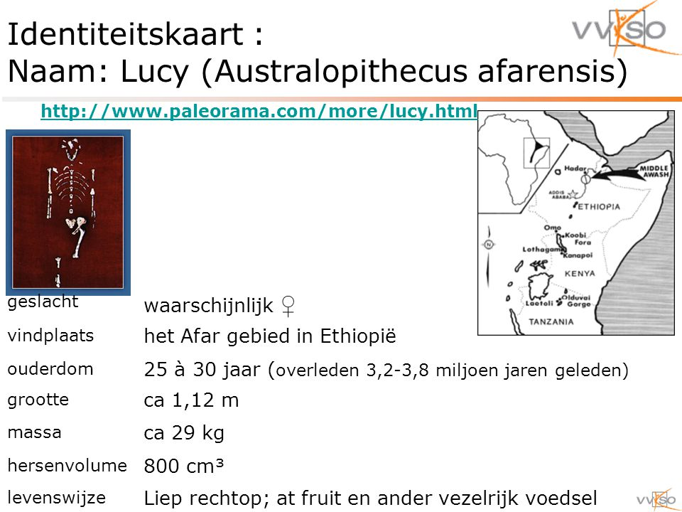Identiteitskaart : Naam: Lucy (Australopithecus afarensis)