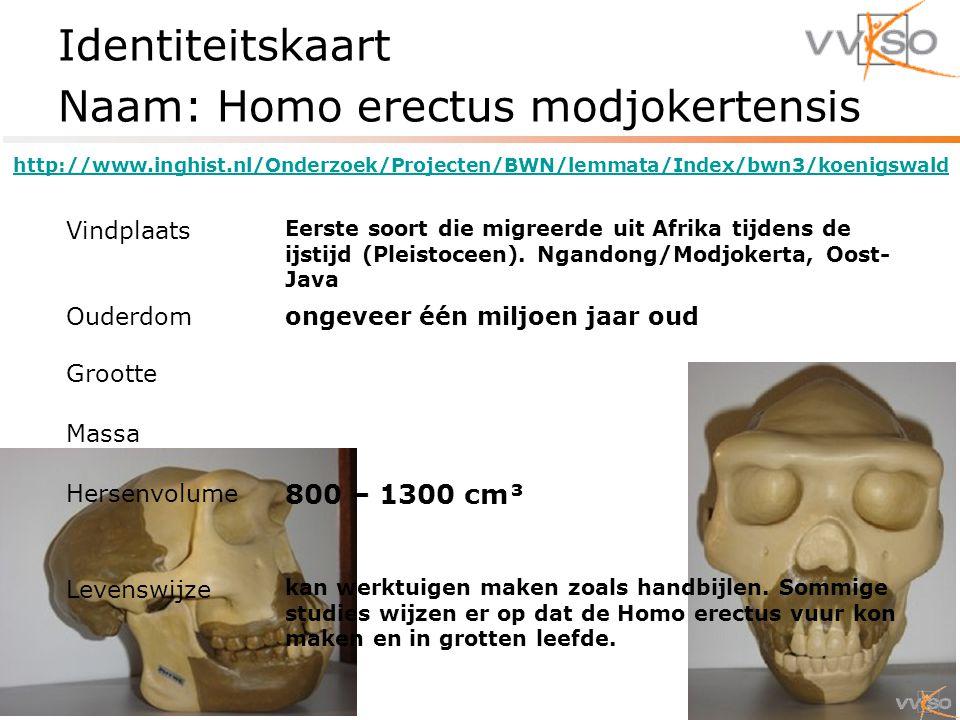Identiteitskaart Naam: Homo erectus modjokertensis