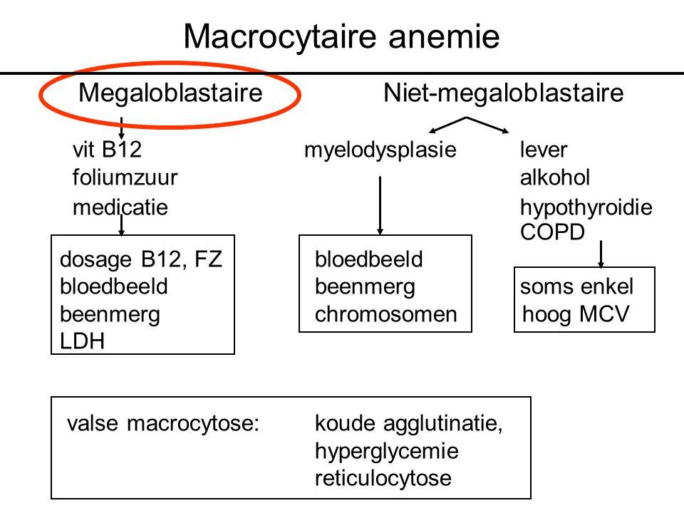 Macrocytaire anemie Megaloblastaire Niet-megaloblastaire