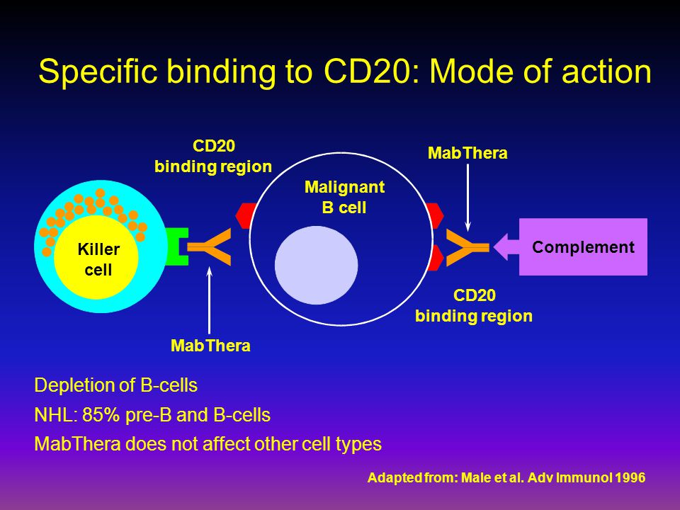 Specific binding to CD20: Mode of action