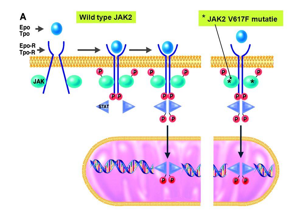 Wild type JAK2 * JAK2 V617F mutatie * *