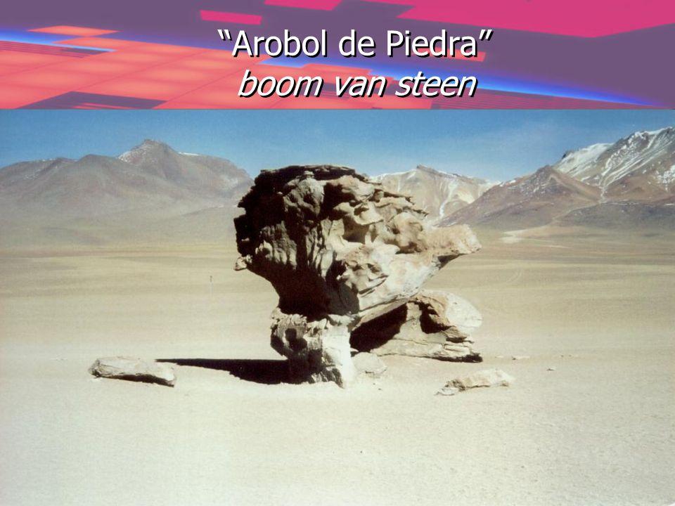 Arobol de Piedra boom van steen