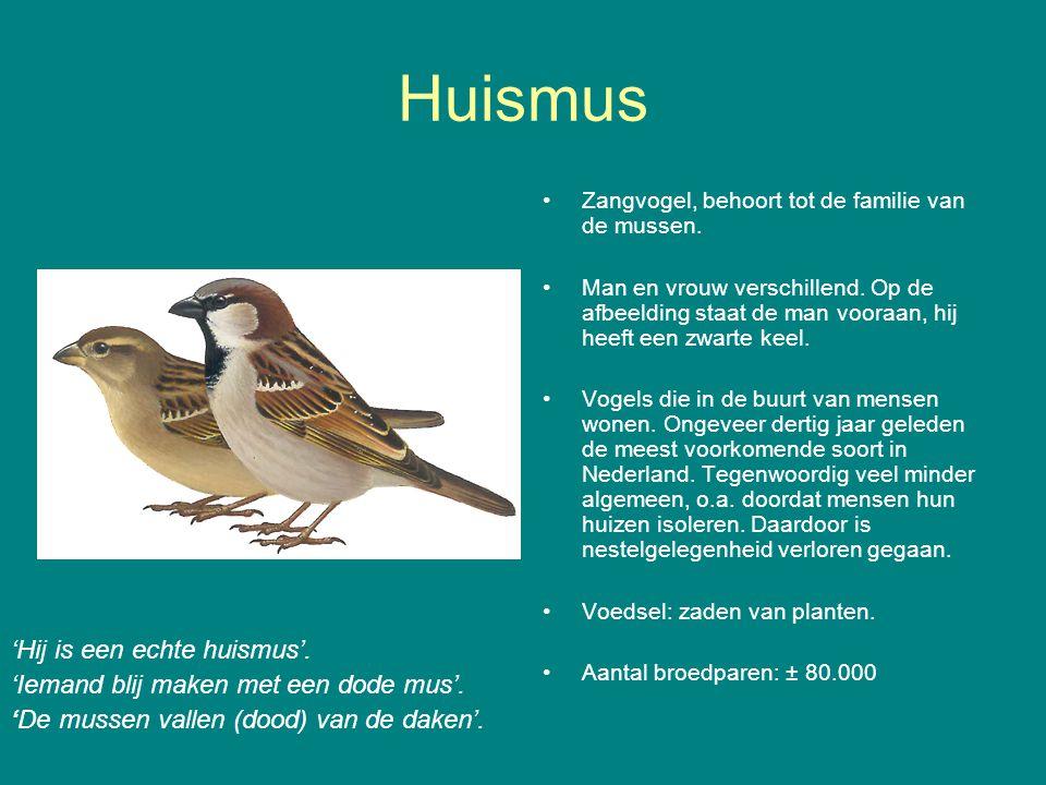 Huismus Zangvogel, behoort tot de familie van de mussen.