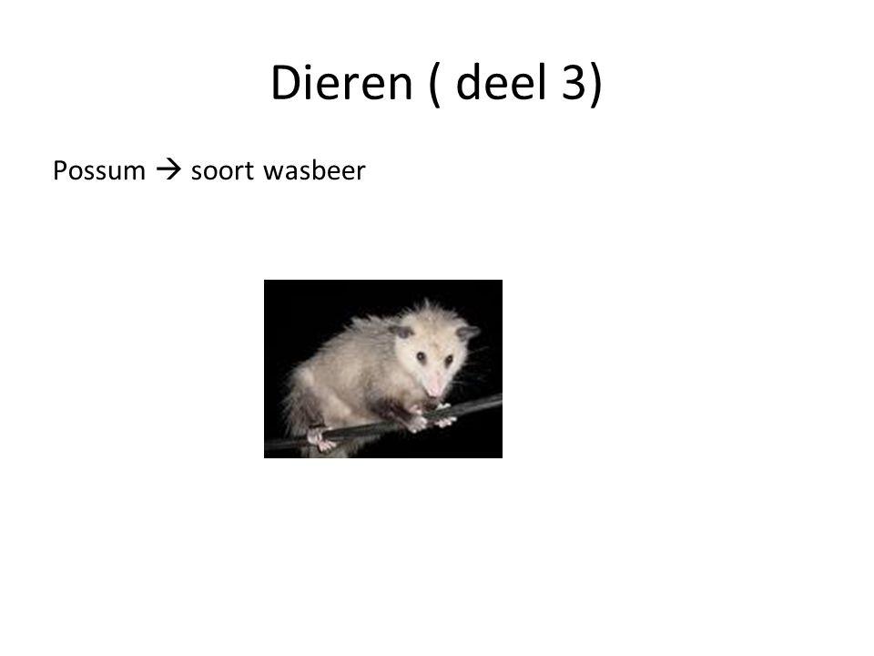 Dieren ( deel 3) Possum  soort wasbeer