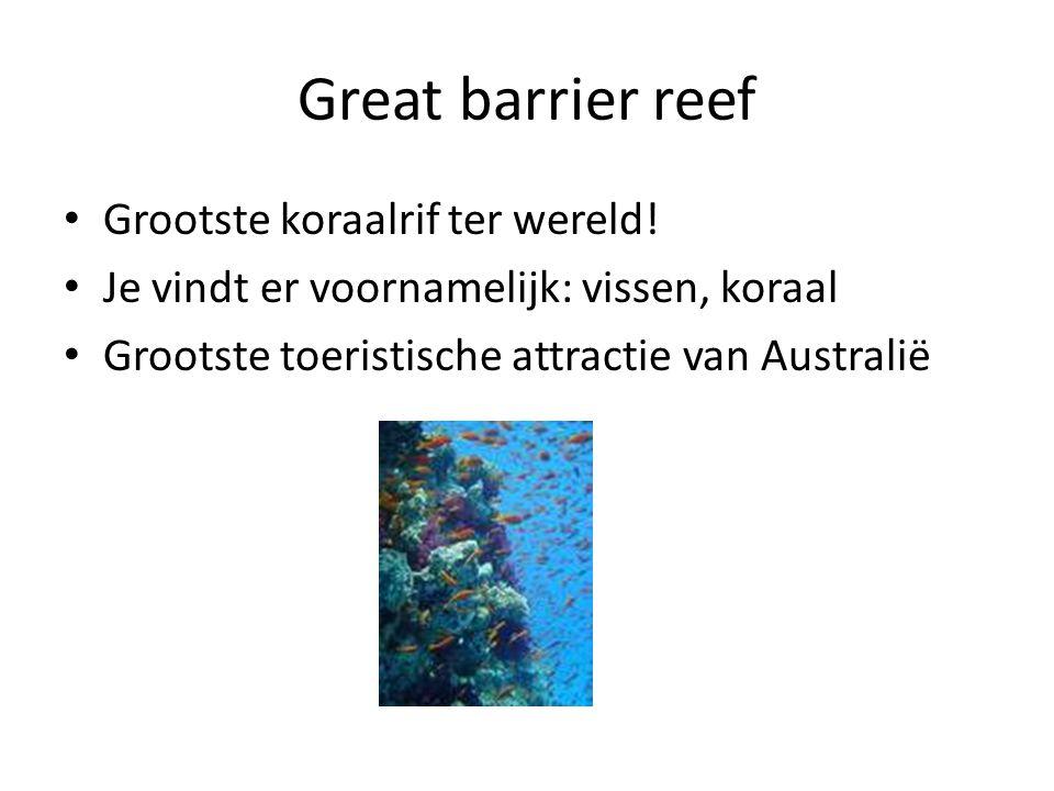 Great barrier reef Grootste koraalrif ter wereld!