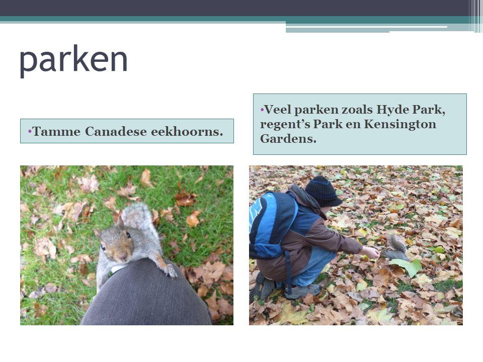 parken Tamme Canadese eekhoorns.