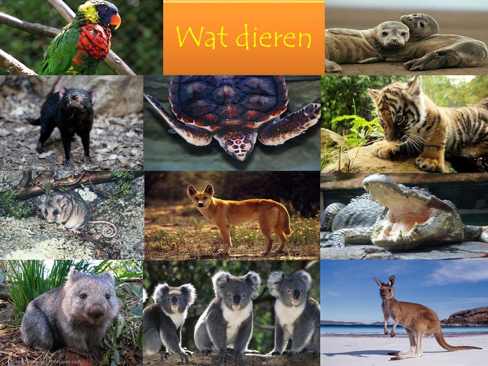 Wat dieren