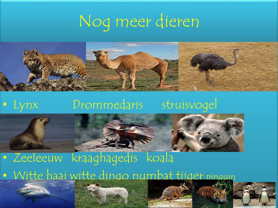 Nog meer dieren Lynx Drommedaris struisvogel