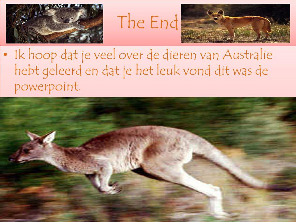 The End Ik hoop dat je veel over de dieren van Australie hebt geleerd en dat je het leuk vond dit was de powerpoint.