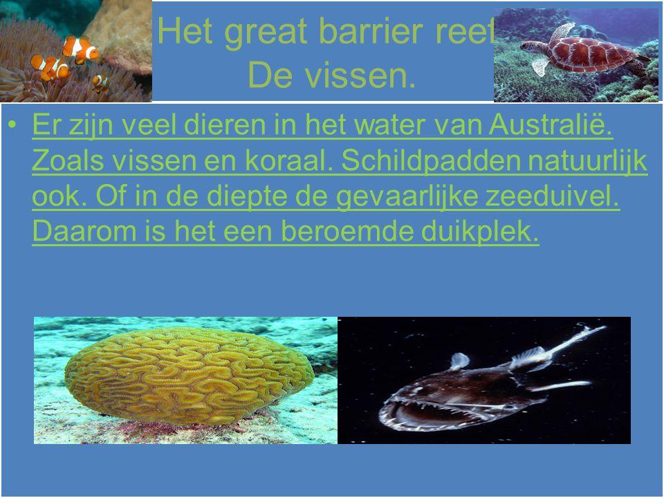 Het great barrier reef. De vissen.