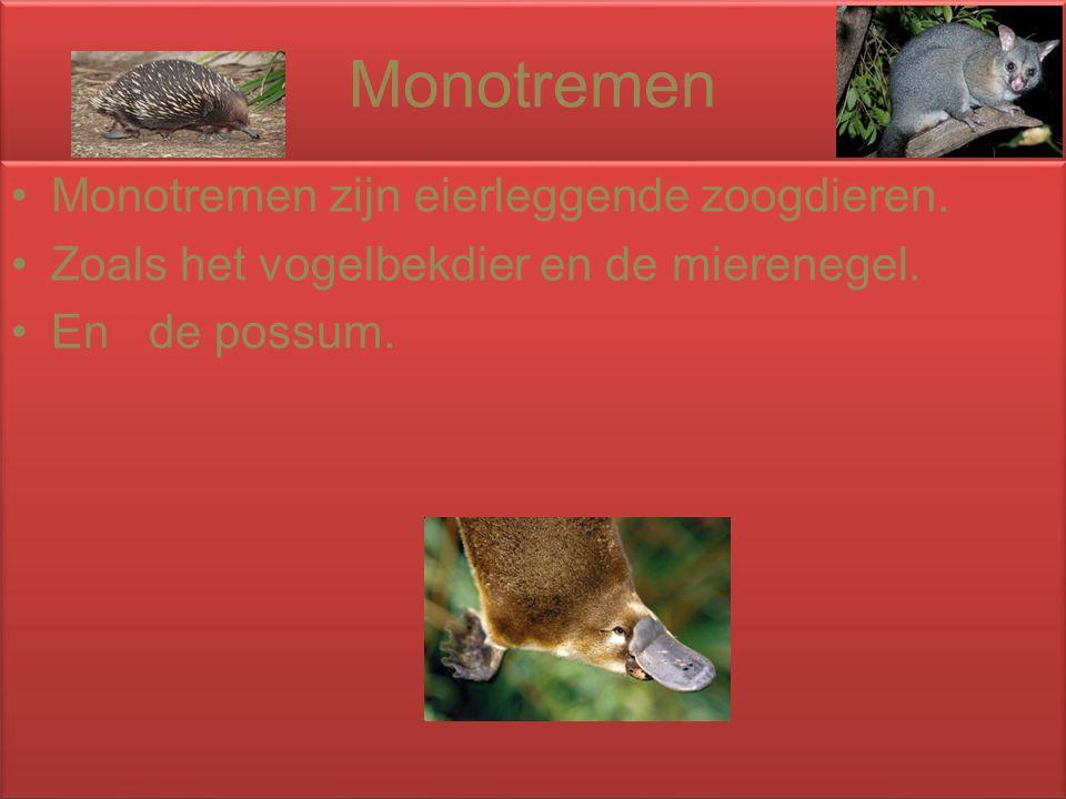 Monotremen Monotremen zijn eierleggende zoogdieren.