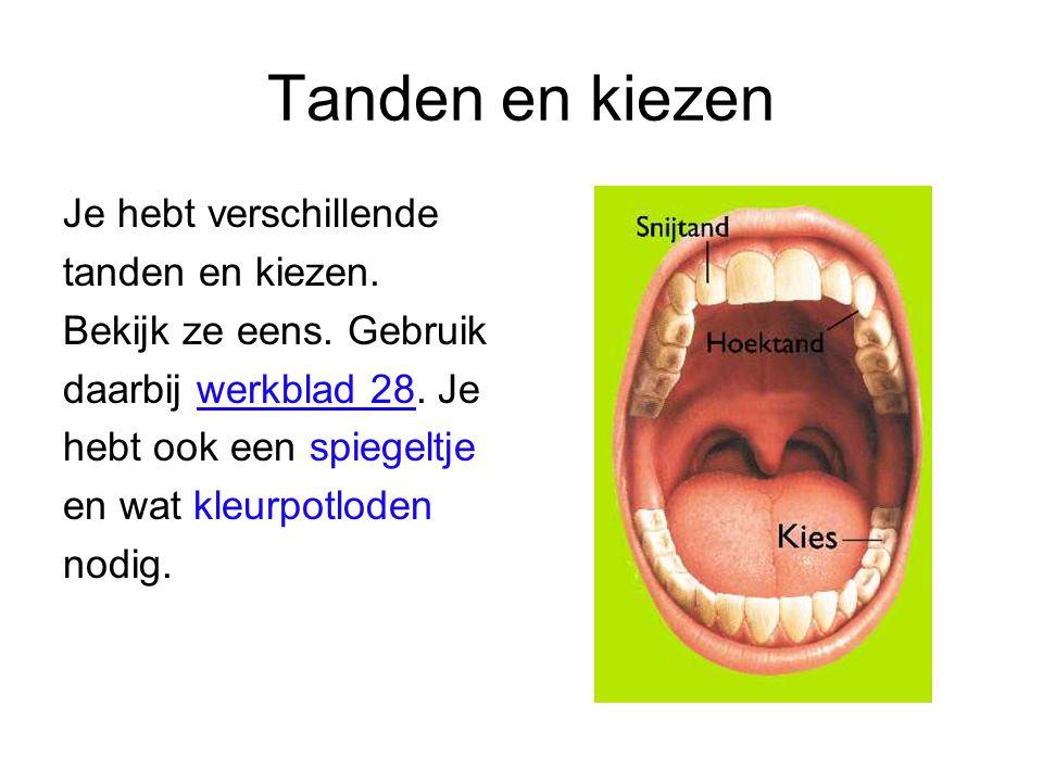 Tanden en kiezen Je hebt verschillende tanden en kiezen.