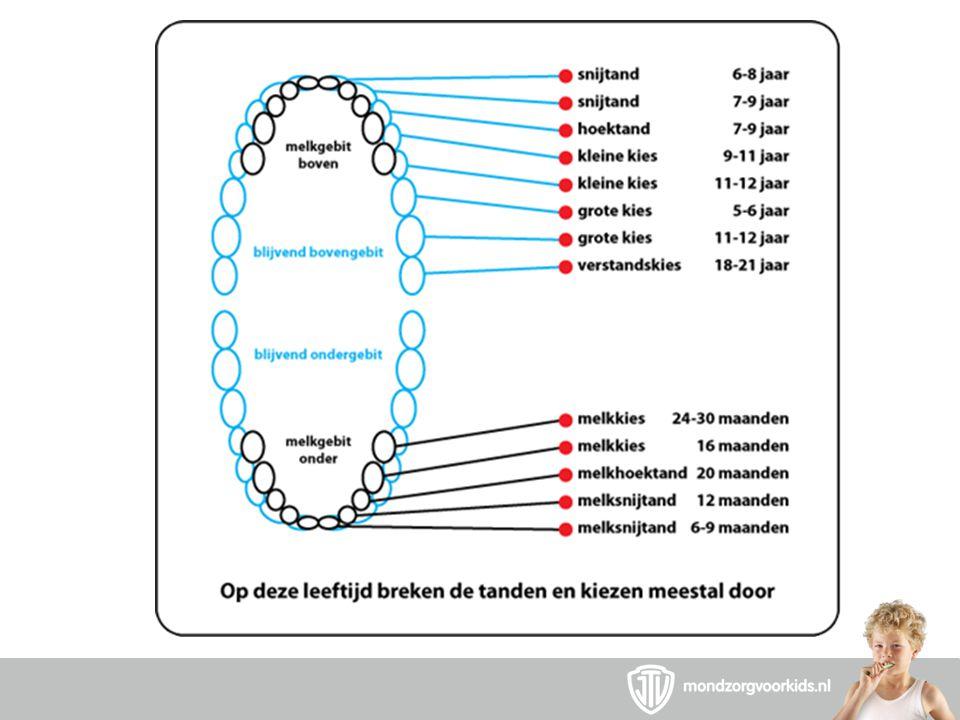Blauw wordt groen JTV 12 kiezen 8 tanden Steeds verder achterin poetsen