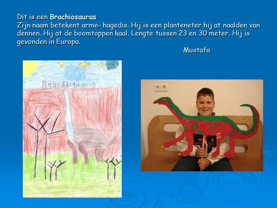 Dit is een Brachiosauras Zijn naam betekent arme- hagedis