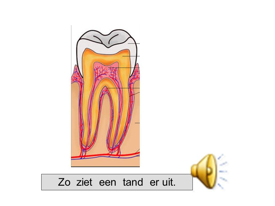 Zo ziet een tand er uit.