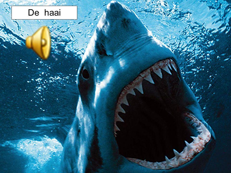 De haai
