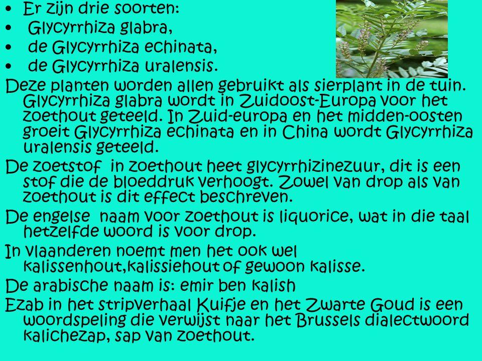 Er zijn drie soorten: Glycyrrhiza glabra, de Glycyrrhiza echinata, de Glycyrrhiza uralensis.