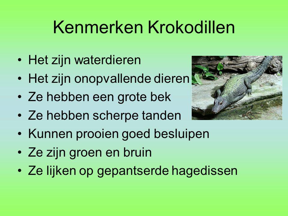 Kenmerken Krokodillen