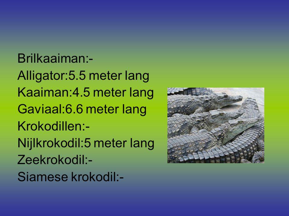 Brilkaaiman:- Alligator:5.5 meter lang. Kaaiman:4.5 meter lang. Gaviaal:6.6 meter lang. Krokodillen:-