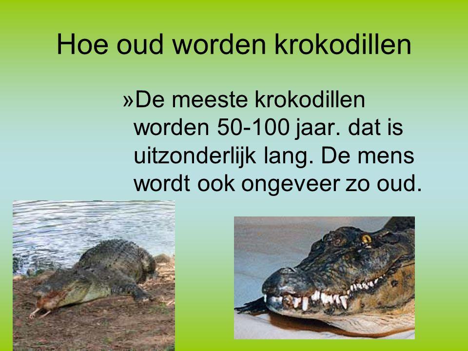 Hoe oud worden krokodillen