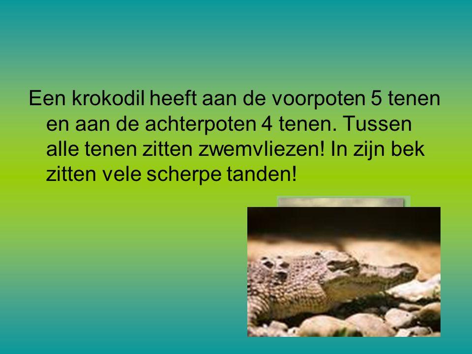 Een krokodil heeft aan de voorpoten 5 tenen en aan de achterpoten 4 tenen.