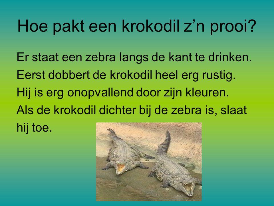 Hoe pakt een krokodil z'n prooi