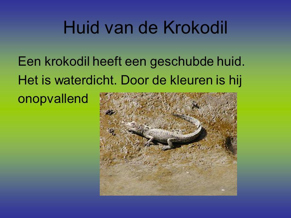 Huid van de Krokodil Een krokodil heeft een geschubde huid.
