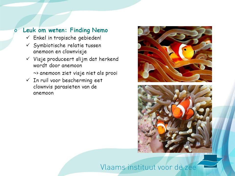 Leuk om weten: Finding Nemo