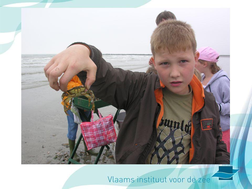 Uitsmijter: Hoe een krab vasthouden zonder geknepen te worden